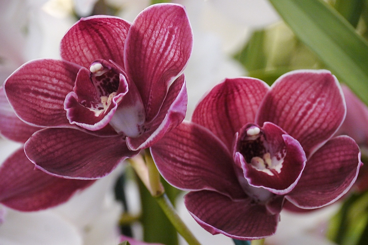 20120915_1219_3510 orchids