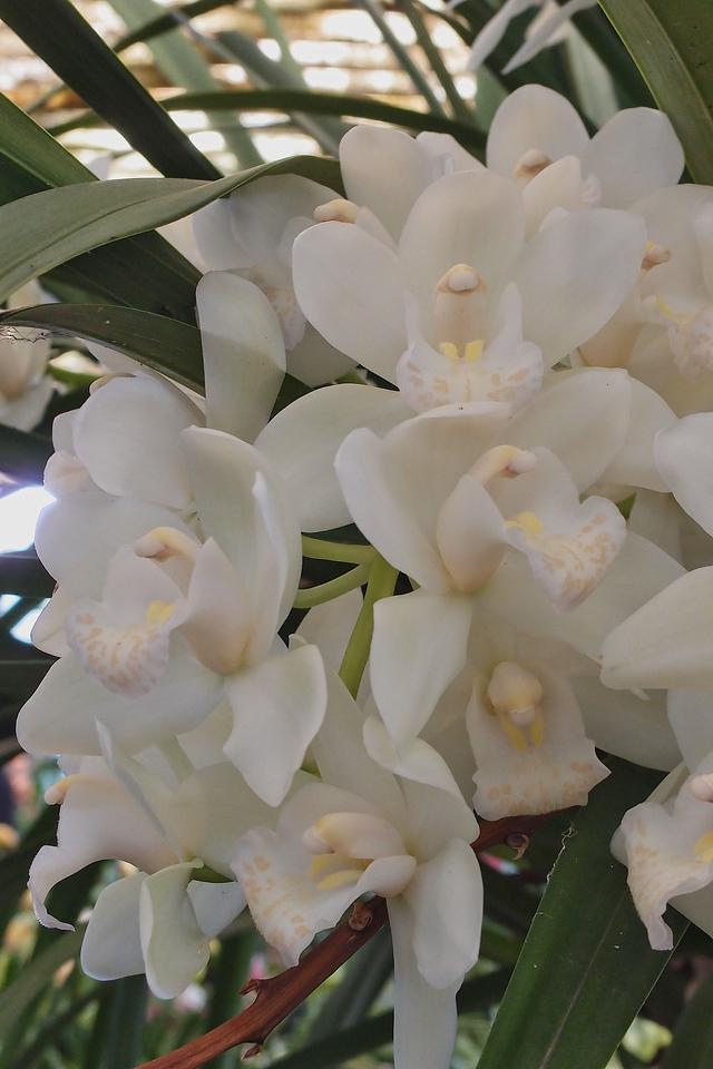 20120915_1156_5095 orchids