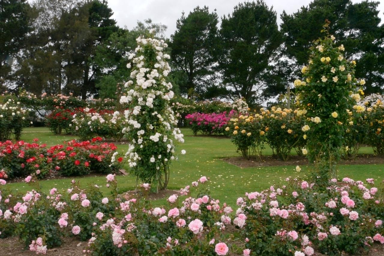 20121117_1033_4820 State Rose Garden, Werribee
