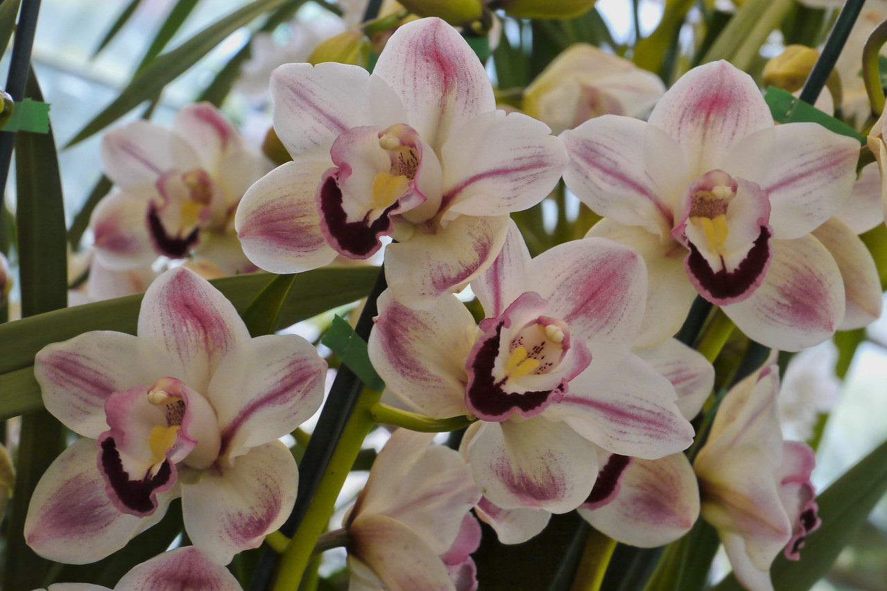 20120915_1208_3496 orchids