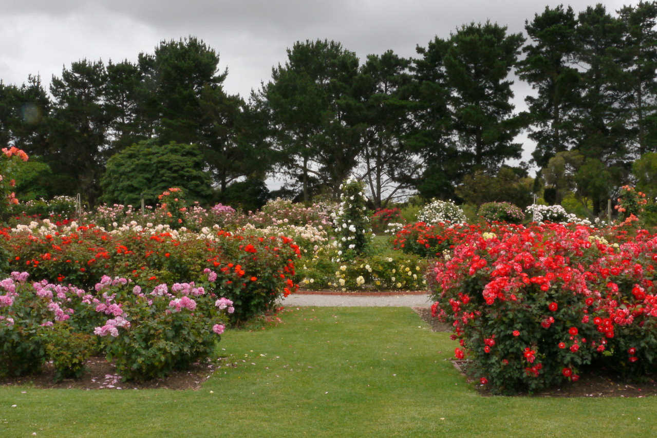 20121117_1020_4808 State Rose Garden, Werribee