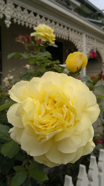 20121126_1906_008 rose