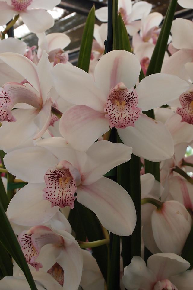 20120915_1156_5093 orchids