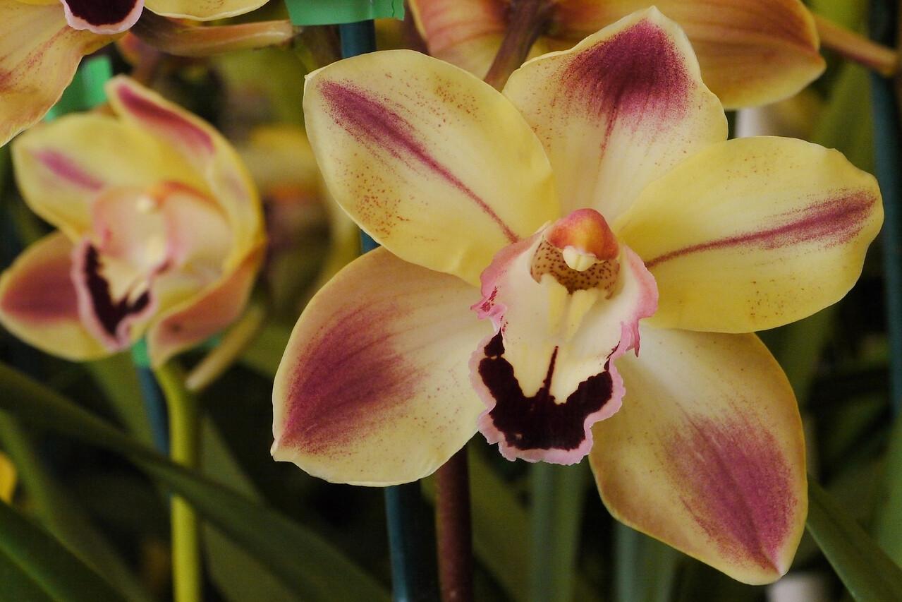 20120915_1347_3595 orchids