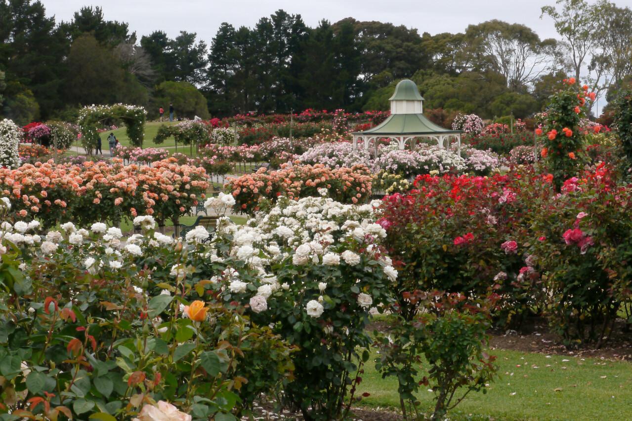 20121117_1000_4796 Werribee State Rose Garden