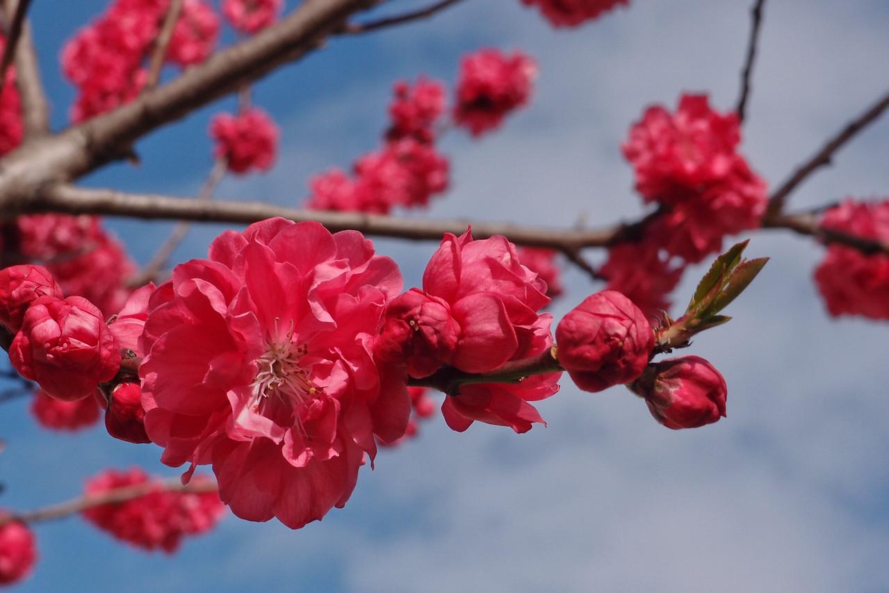 20120913_1017_3066 blossom