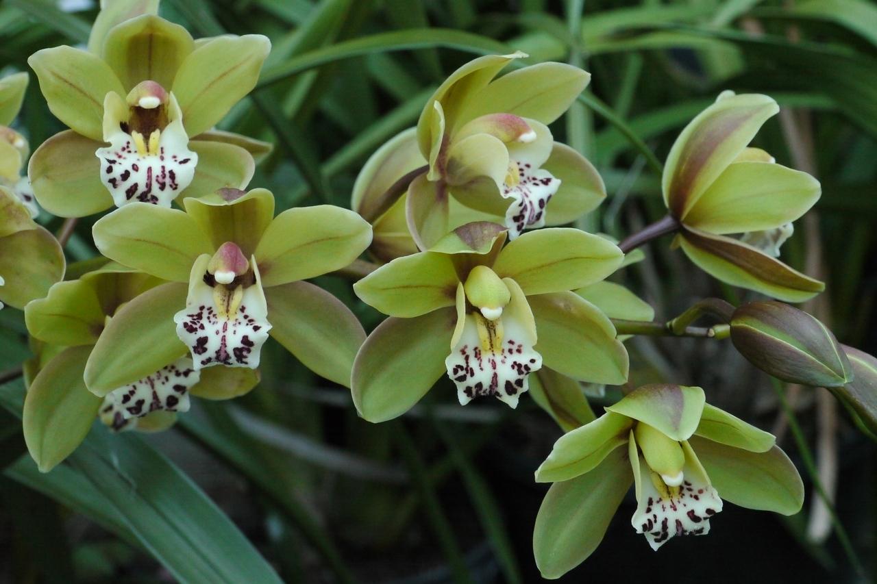 20120901_1733_2765 orchids
