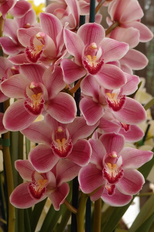 20120915_1242_5124 orchids