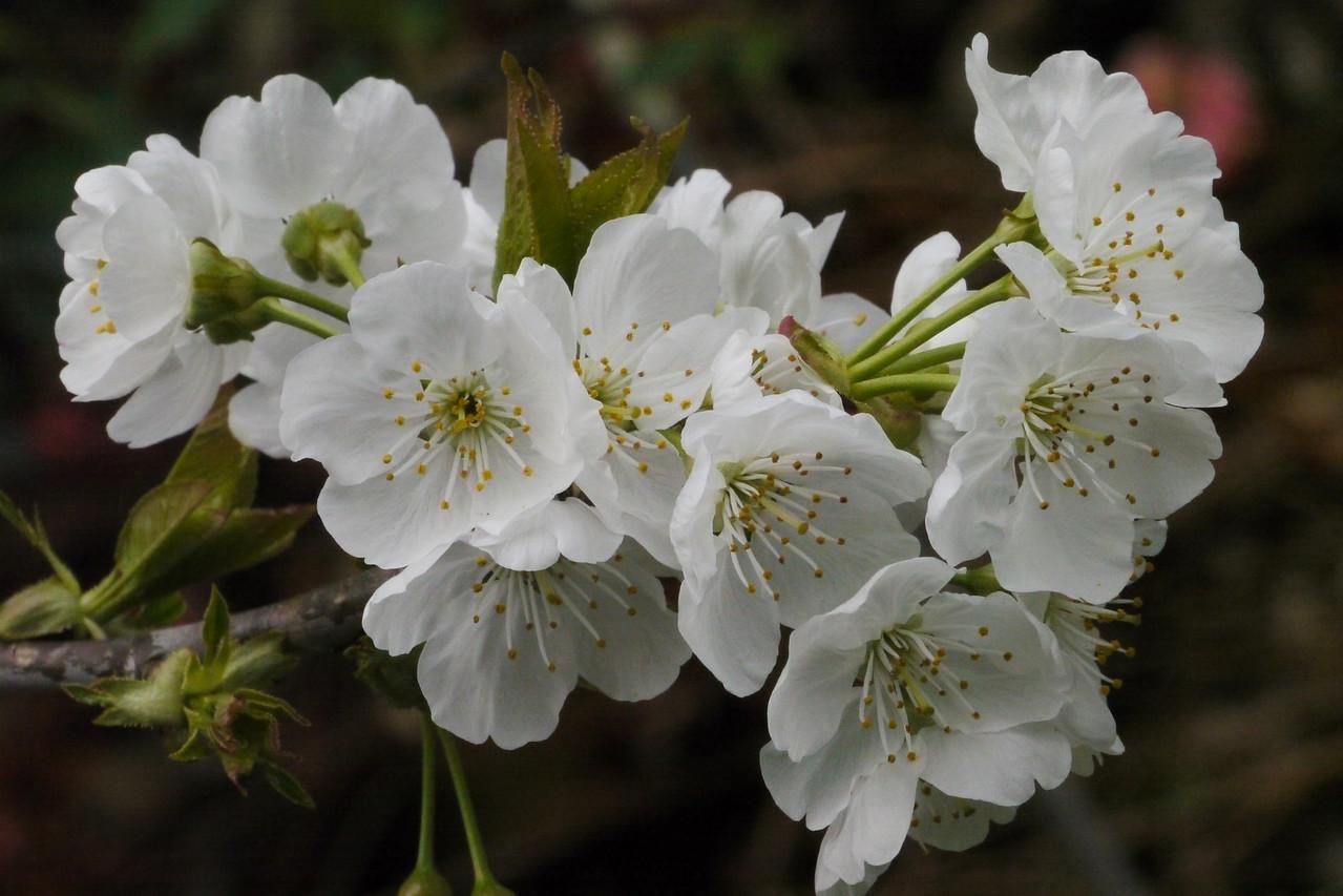 20120923_1203_3698 blossom