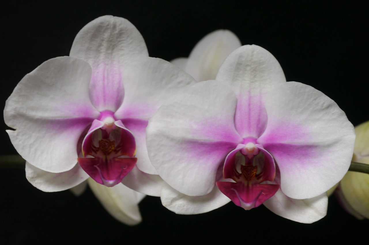 20121011_1215_3914 orchid