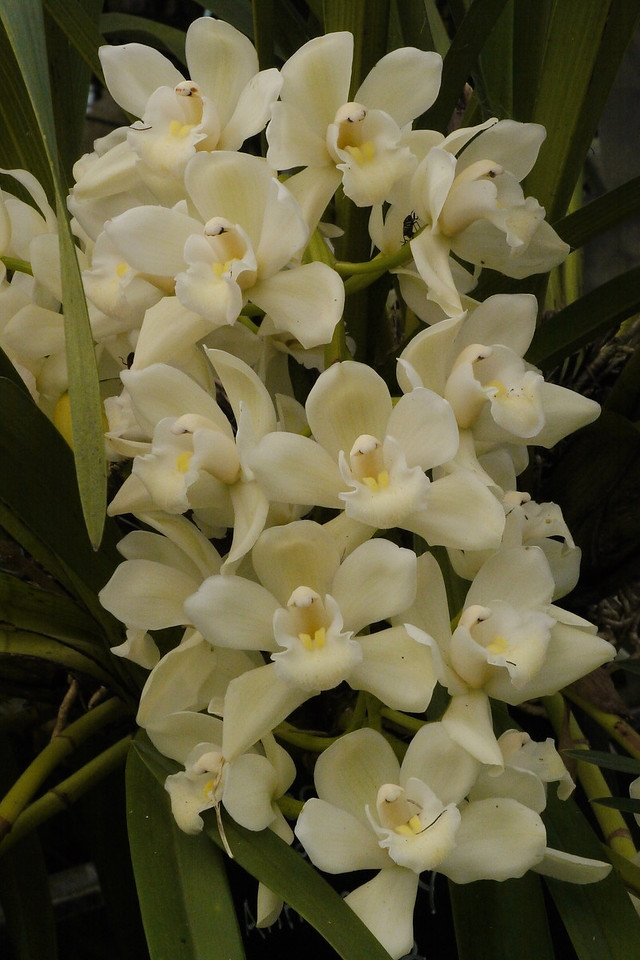 20120915_1335_3579 orchids
