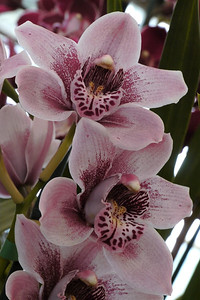 20120915_1351_3599 orchids