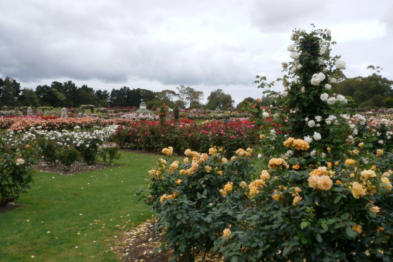 20121117_0947_4779 Werribee Rose Garden