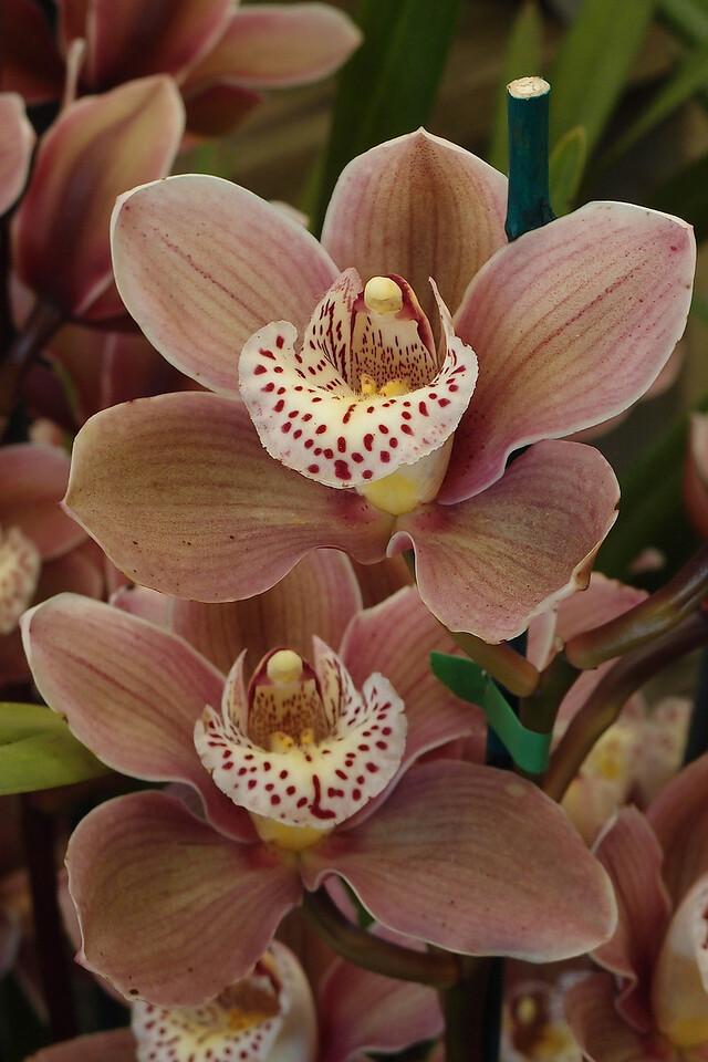 20120915_1156_5096 orchids