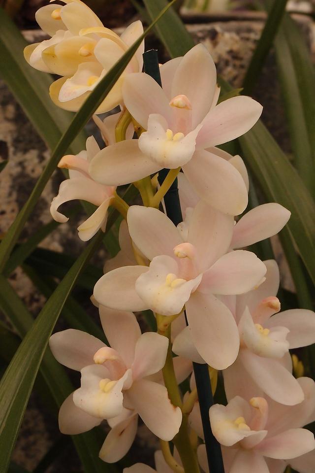 20120915_1528_5147 orchids