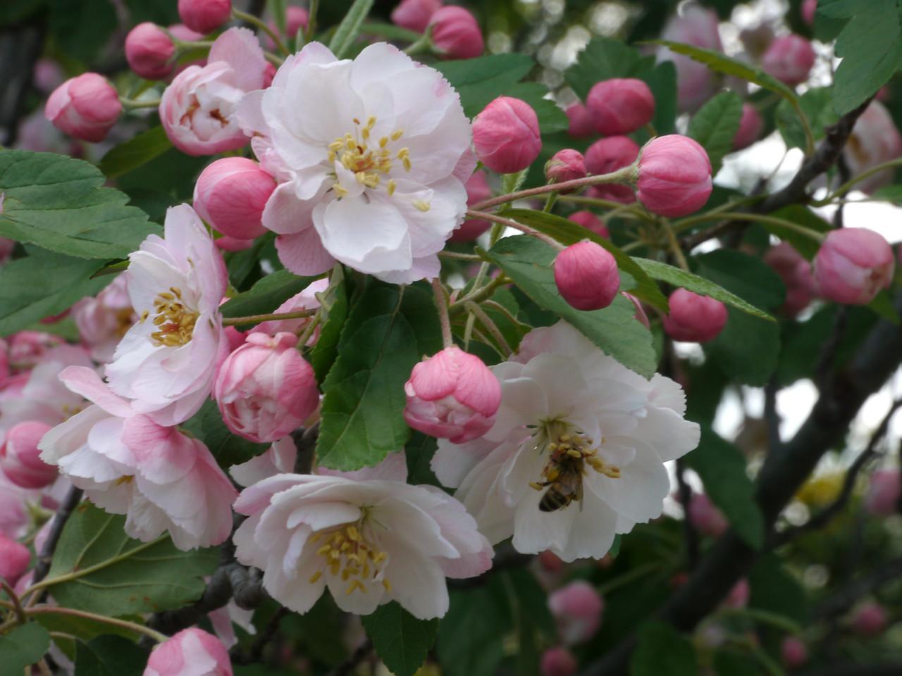 20121019_1203_4112 blossom
