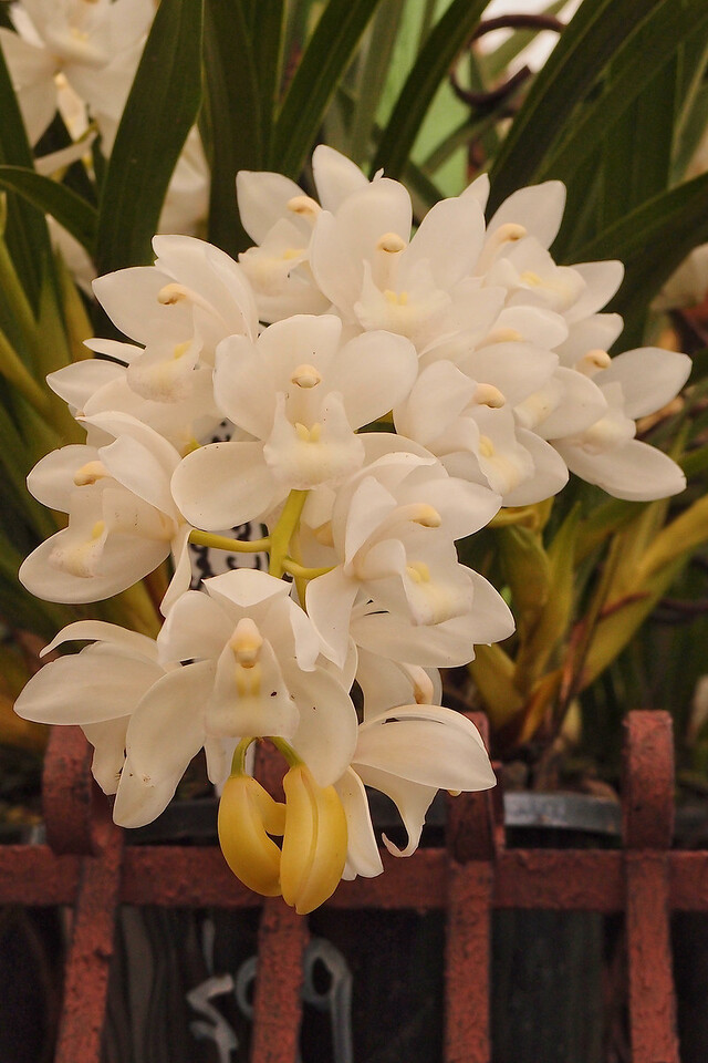 20120915_1258_5141 orchids