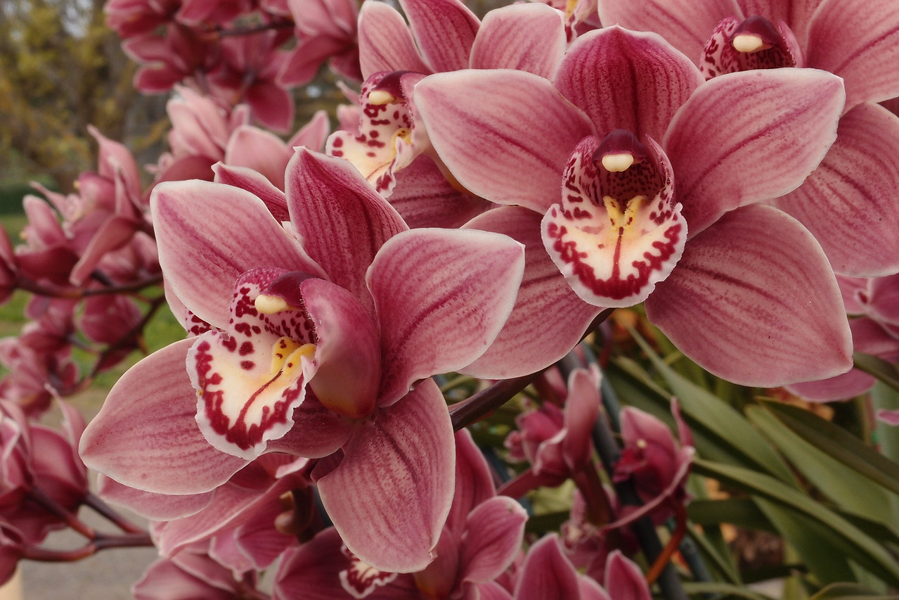 20120915_1131_5074 orchids