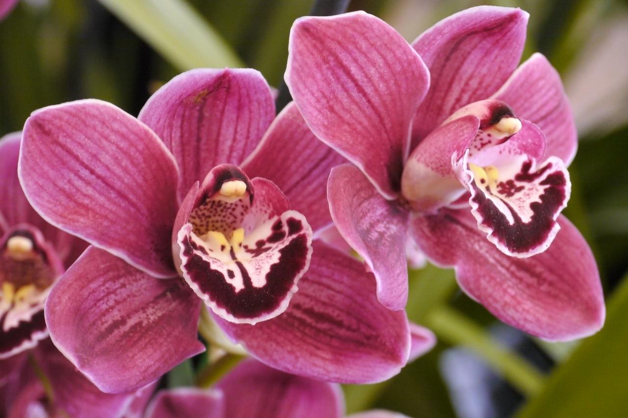 20120915_1251_3543 orchids