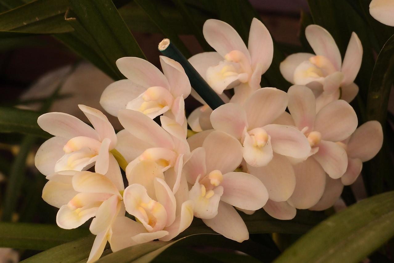 20120915_1259_5143 orchids