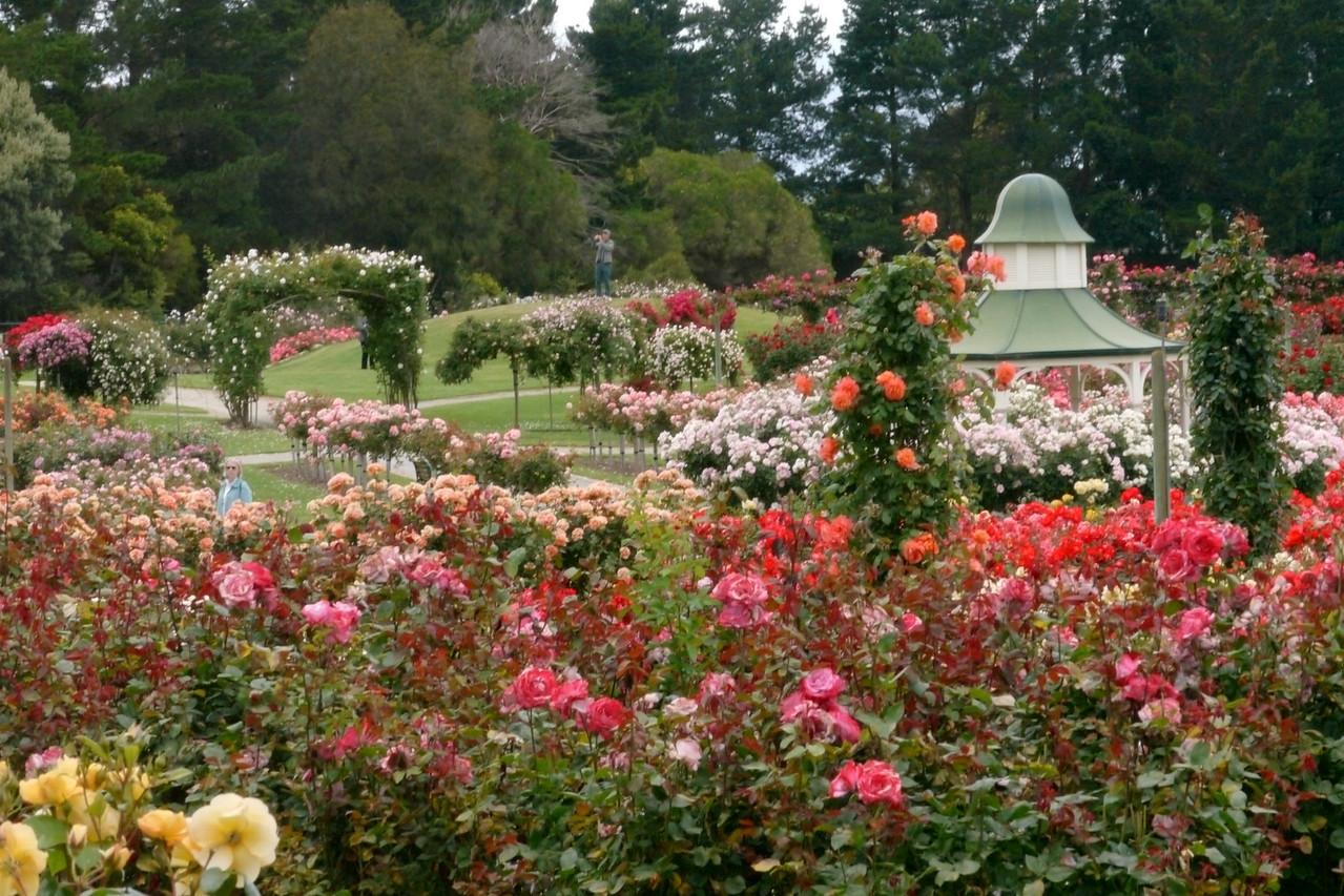 20121117_1044_4828 State Rose Garden, Werribee