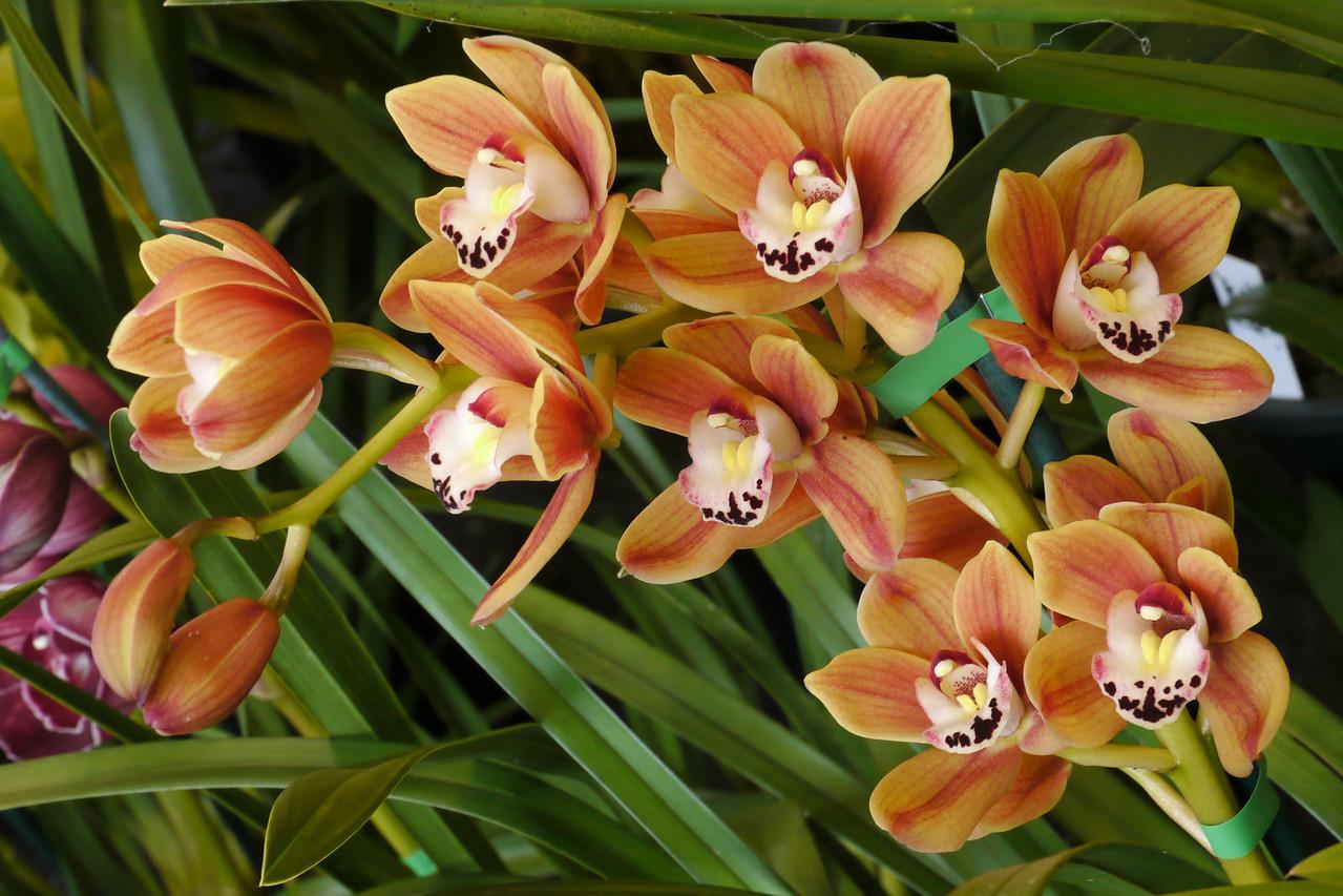 20120915_1200_3485 orchids