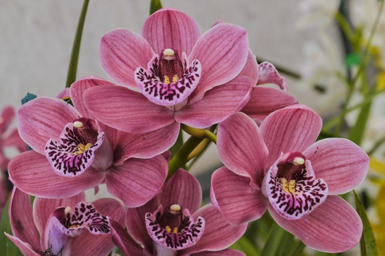 20120915_1338_3583 orchids
