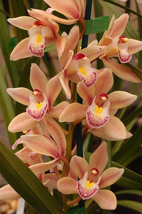 20120915_1534_5152 orchid