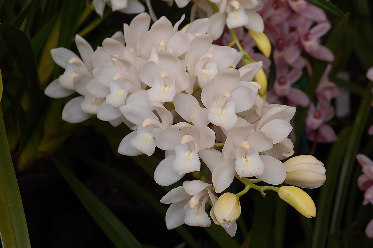 20120915_1238_5113 orchids