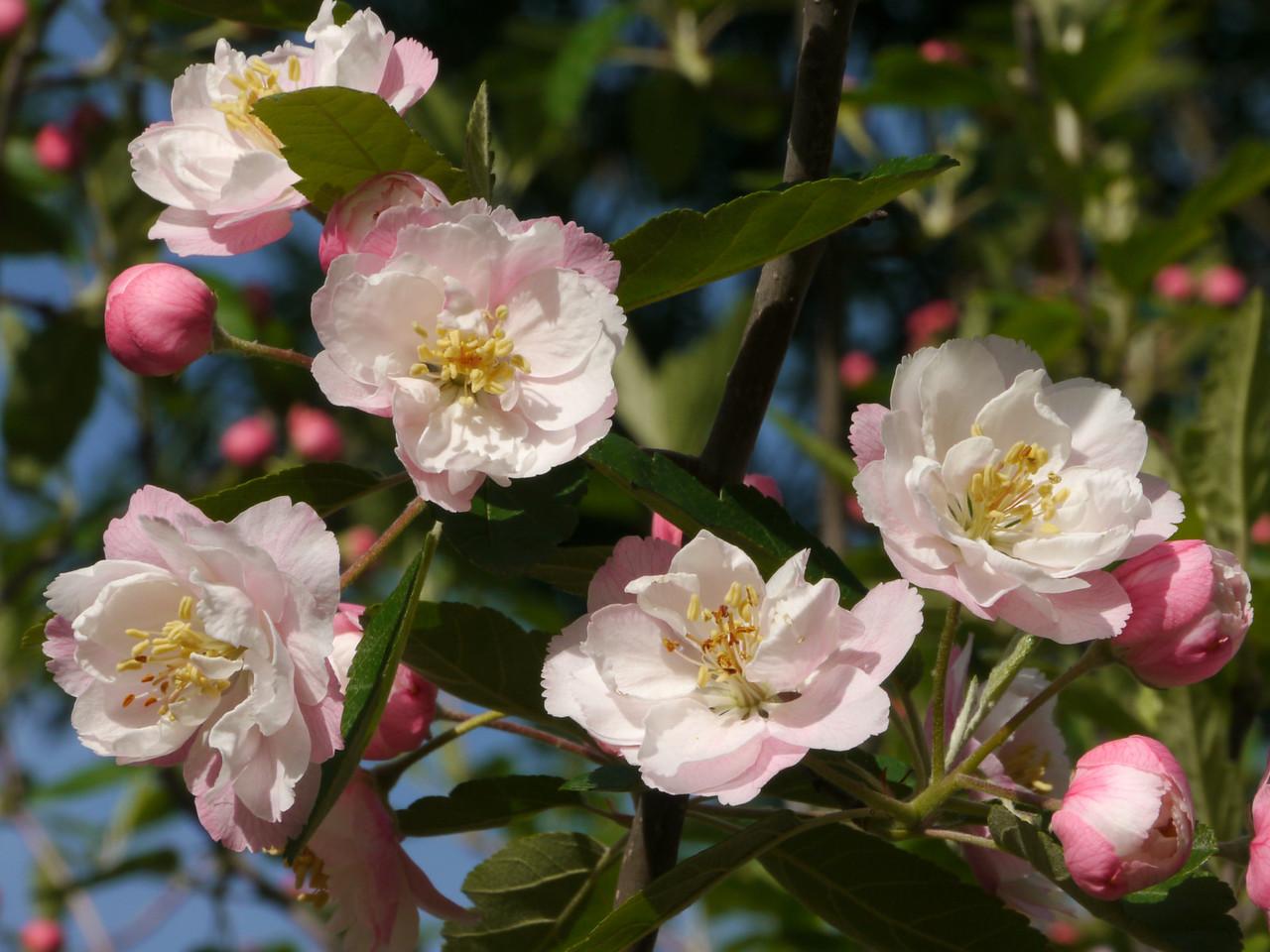 20121018_0820_4032 blossom