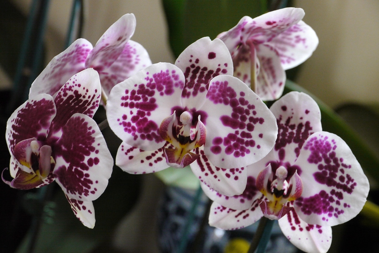 20120915_1329_3570 orchids