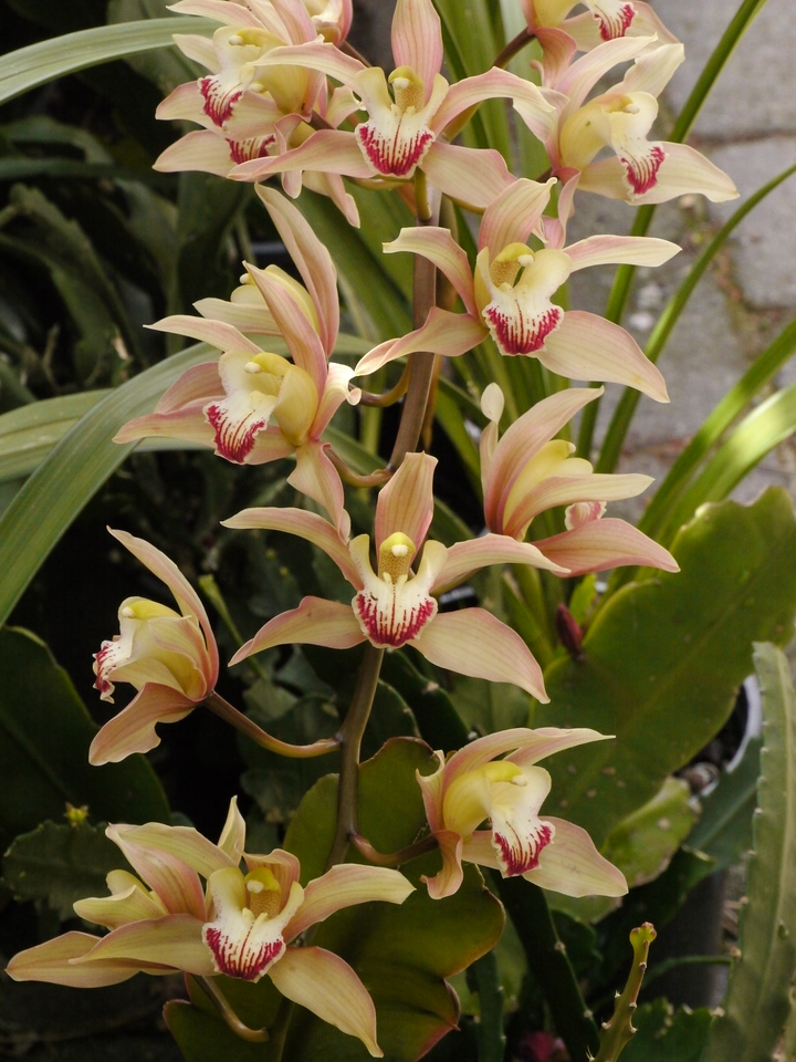 20121018_1132_4091 orchid