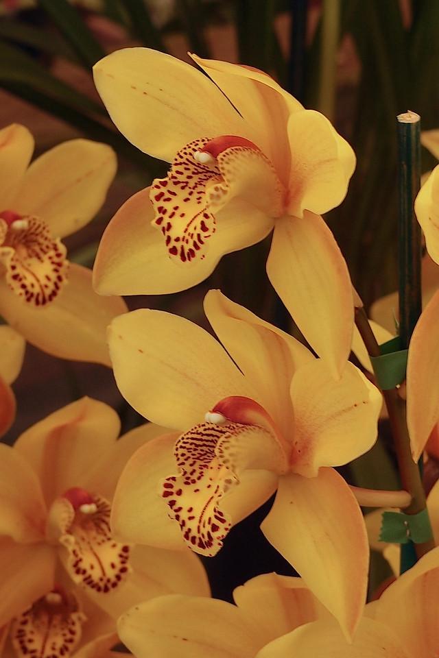20120915_1243_5125 orchids