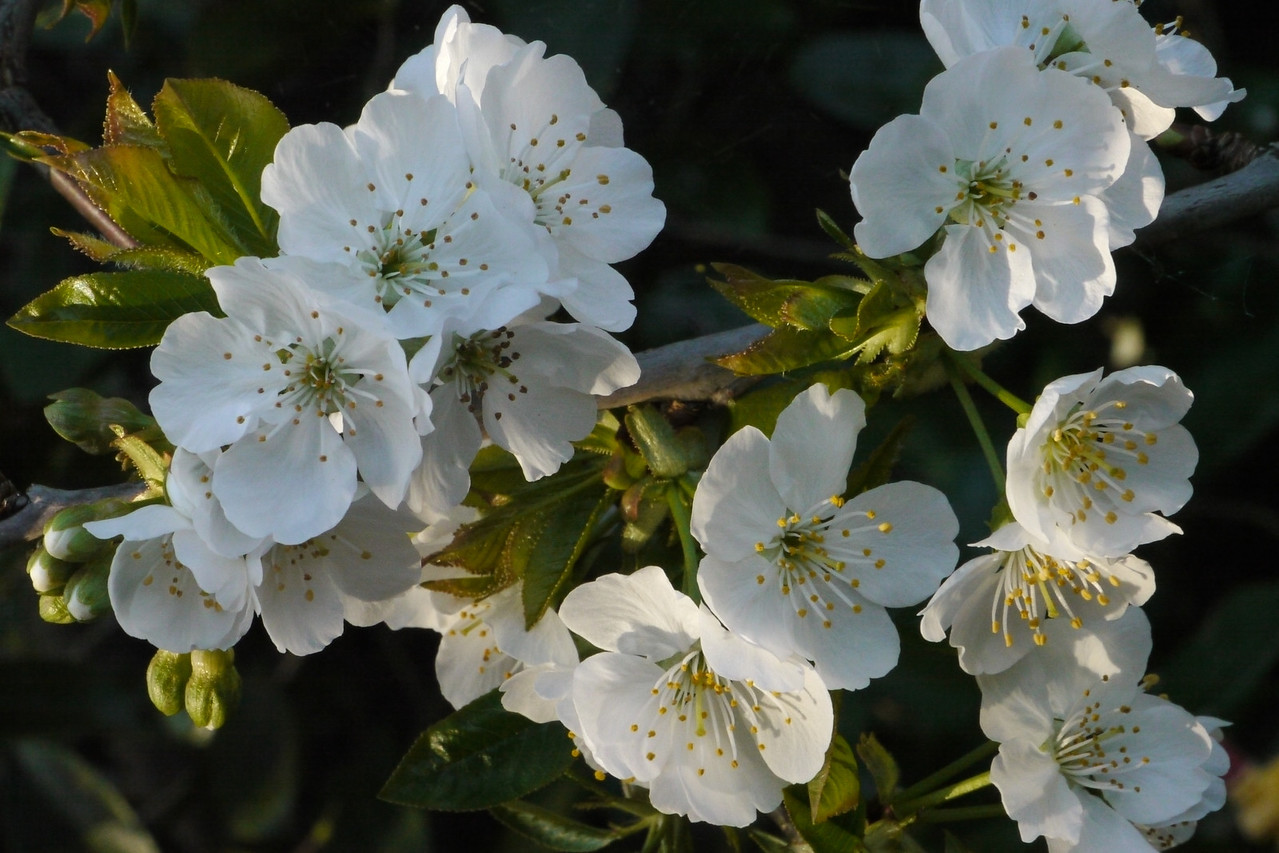 20120923_1656_3715 blossom