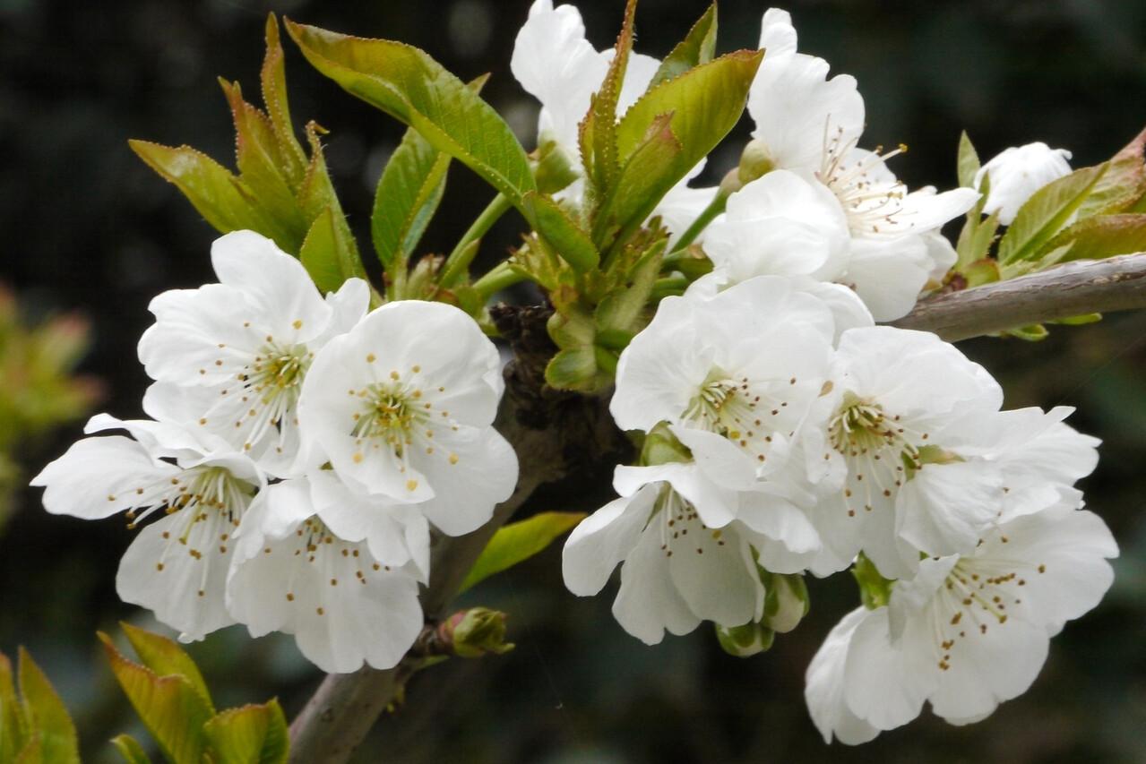 20120923_1205_3704 blossom