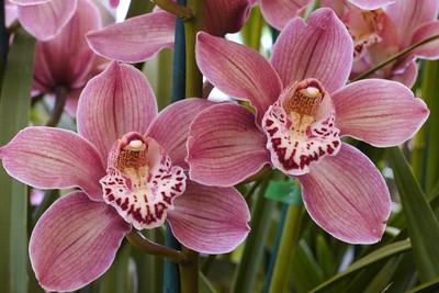 20120915_1352_3602 orchids