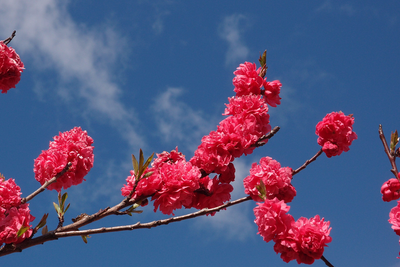 20120913_1019_3070 blossom