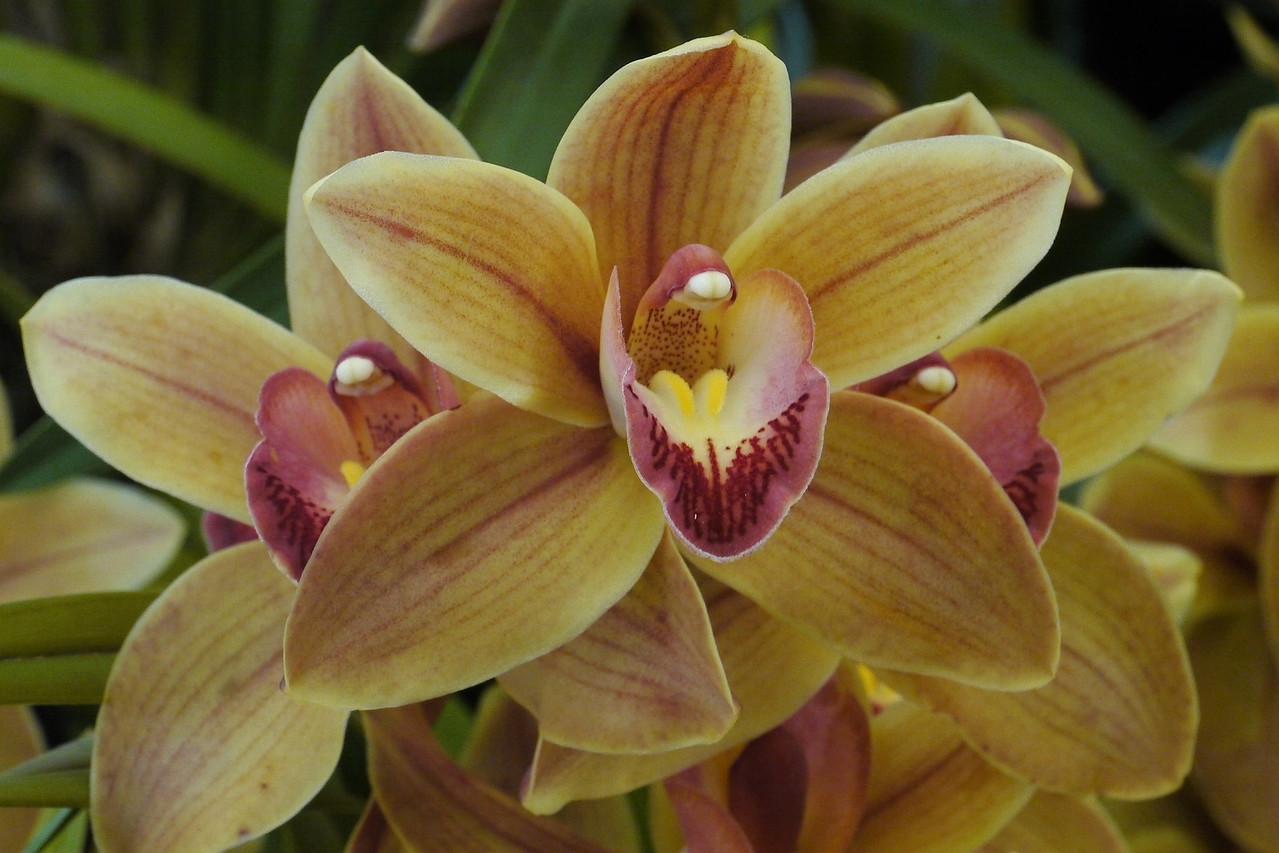 20120915_1350_3597 orchids