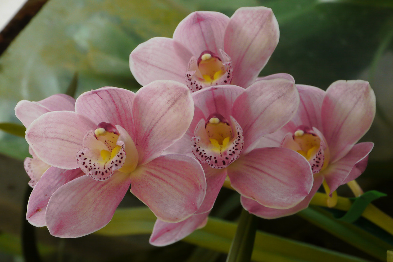 20120915_1158_3480 orchids