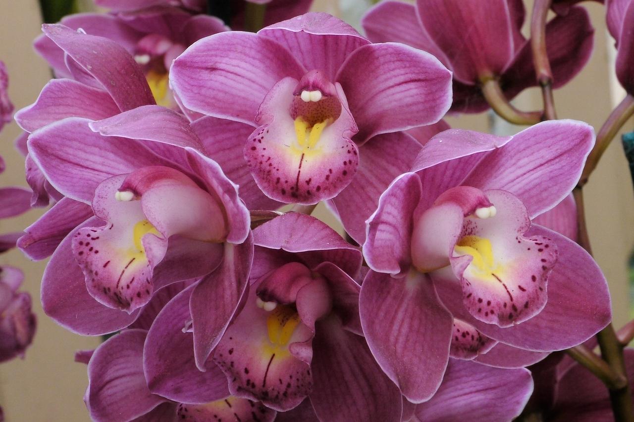 20120915_1334_3578 orchids