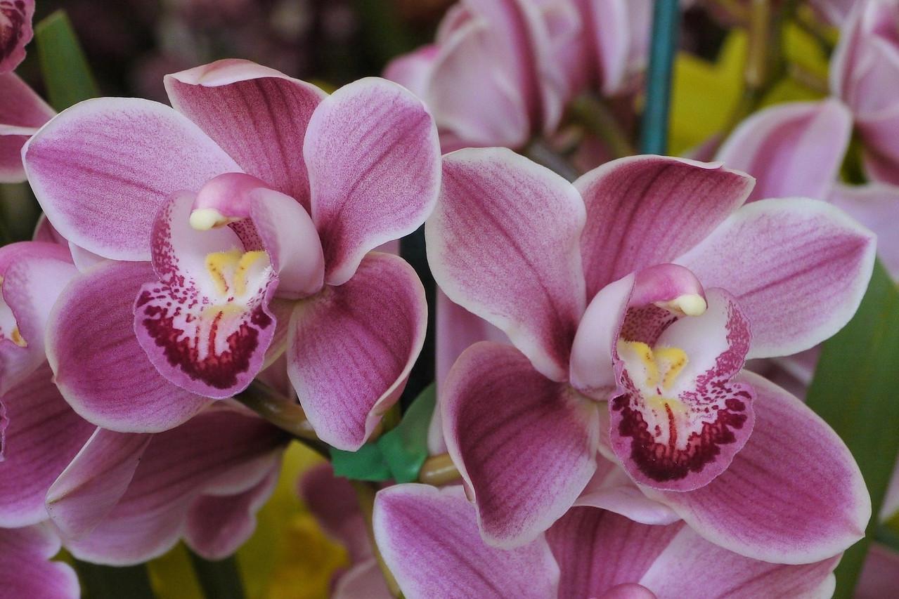 20120915_1346_3593 orchids