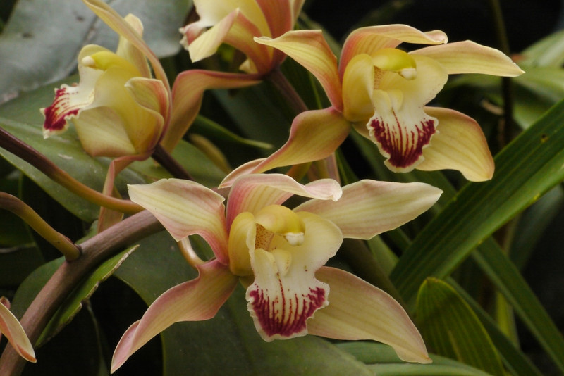 20121006_0900_3890 orchid