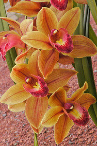 20120915_1541_3632 orchids