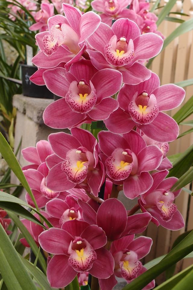 20120915_1226_5097 orchids