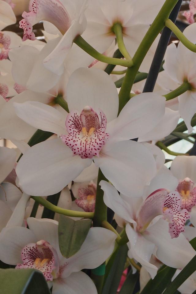20120915_1140_5077 orchids