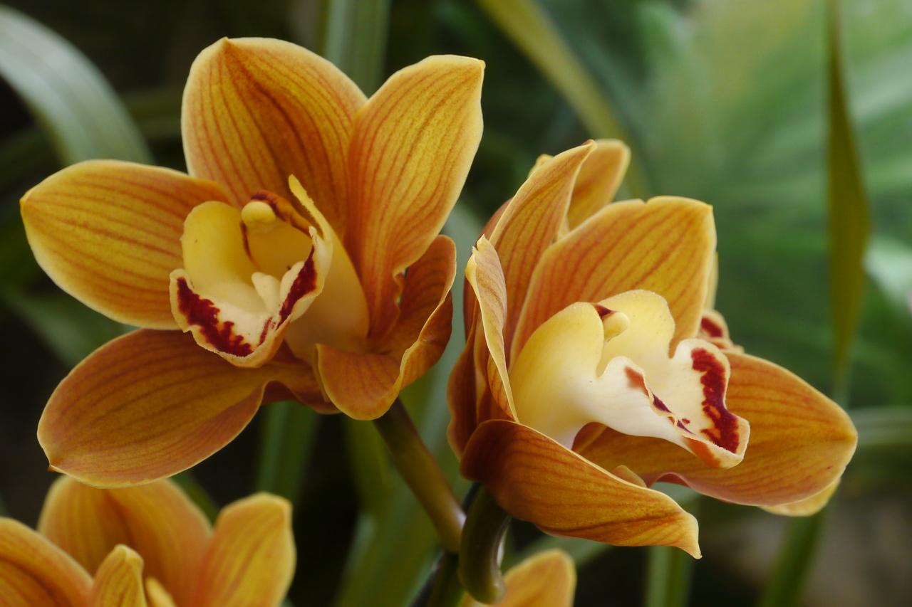 20120915_1159_3482 orchids