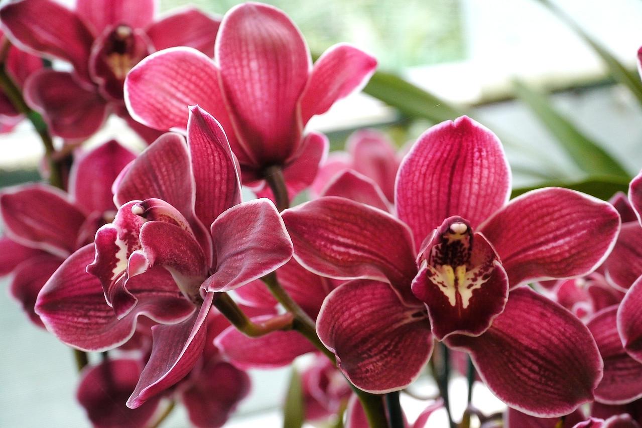 20120915_1423_3621 orchids
