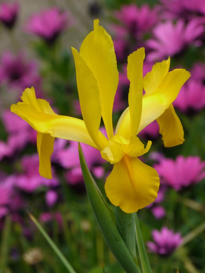 20121013_0809_3954 iris