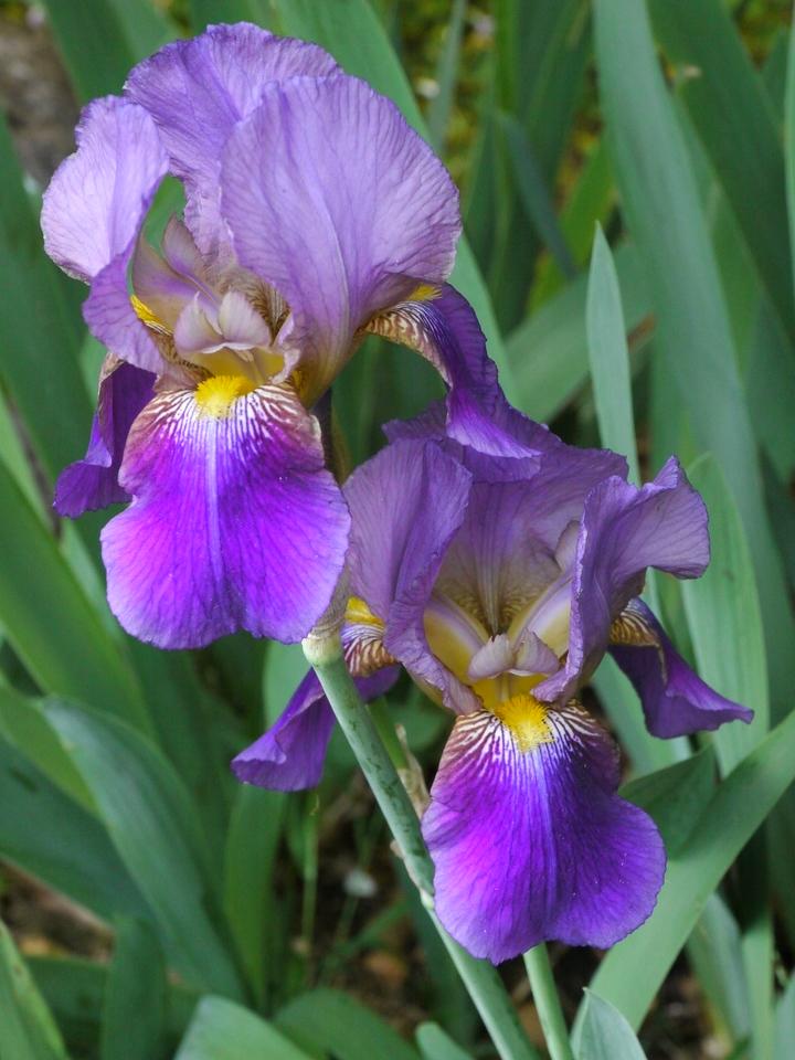 20121021_0701_4130 iris