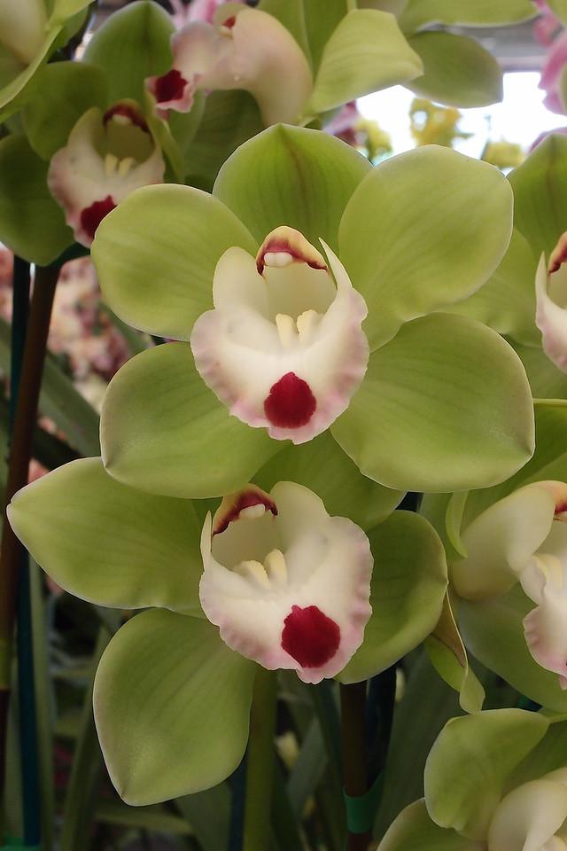 20120915_1145_5081 orchids